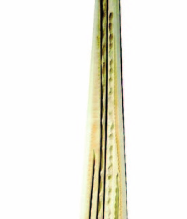 132 cm